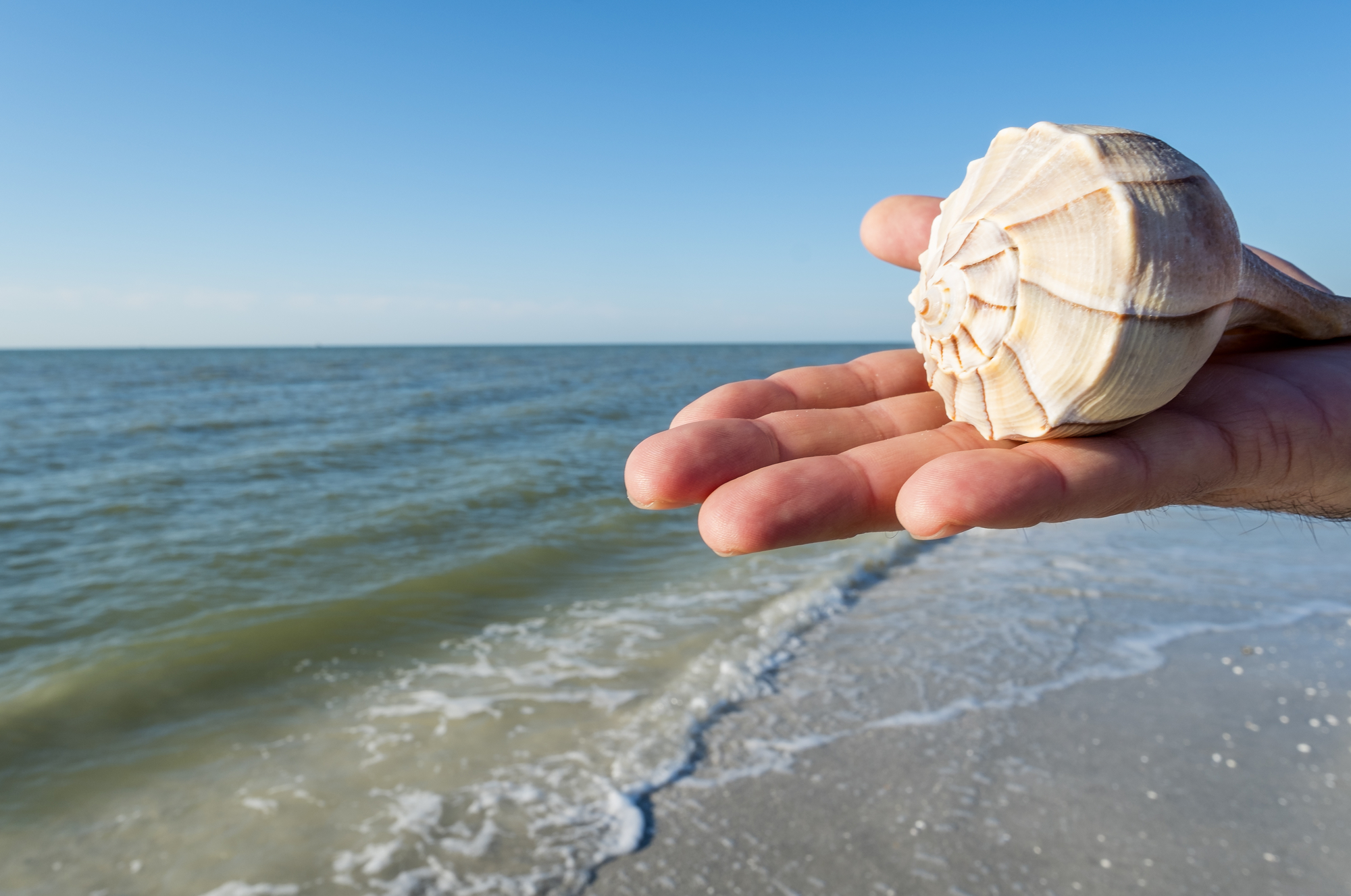 How Amp When To Find The Best Seashells At Sandbridge Beach Sandbridge Blue Blog Sandbridge