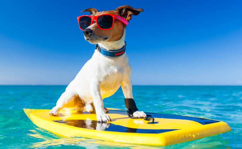 dog friendly vacation in Sandbridge